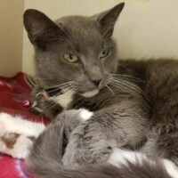 Mittens (224661) Lancaster - Free to a Great Home!