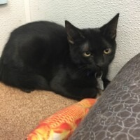 ADOPTED! Paperclip (224482)