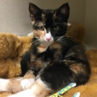 ADOPTED! Road Runner (224277)
