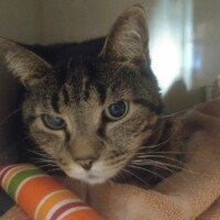 Sweet Pea (225653) Lancaster - Free To A Great Home