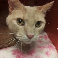 ADOPTED! Trickster (224391)