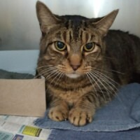 Twitch (223614) Reading - Free to a Great Home
