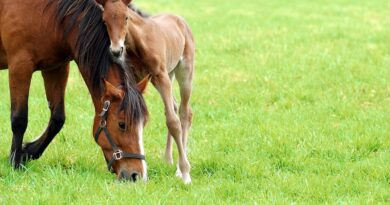 Essential Omega-3 and Omega-6 Fatty Acids for Horses