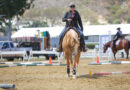Create Longevity in Your Show Horse.