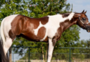 Carney Performance Horses Benefit Auction set to Raise Funds for Fire Devastated Carney Performance Horses