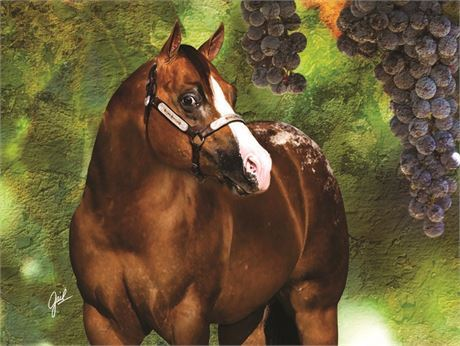 Te Coolest - ApHC Stallion