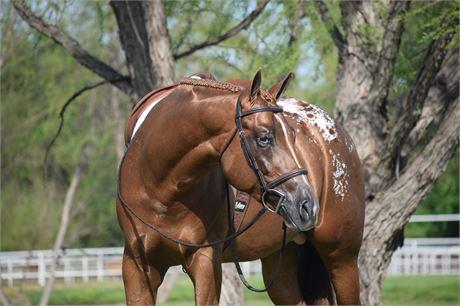ApHC Stallion Hands Off My Stetson