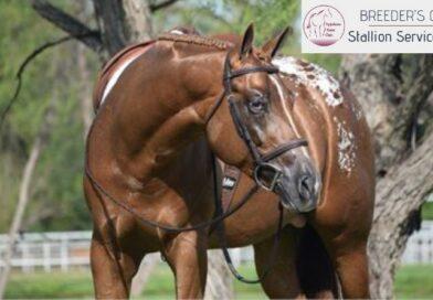 2019 ApHC Stallion Auction Shows its Colors