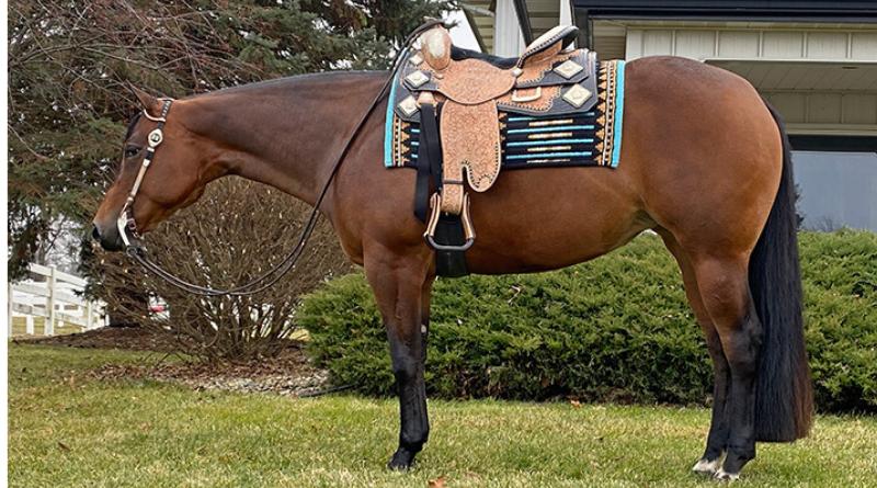 3 Internet Auctions Closing Soon – 1 Horse Auction, 2 Stallion Service Auctions