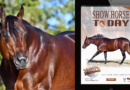 January 2020 Stallion Issue of Show Horse Today