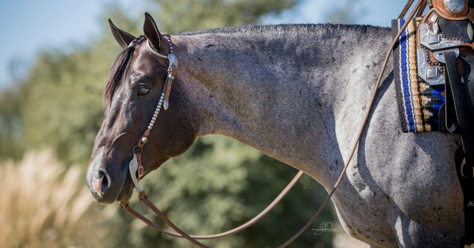 VS GoodRide 2019 NSBA Horse of the Year
