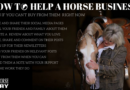 How to Help a Horse Business