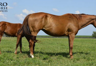 Shop Horses and Saddles Now – 2 July INTERNET Auctions