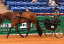 AQHA Postpones Adequan® Select World