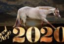 Goodbye 2020 – Top 10 Stories of 2020