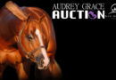 Audrey Grace Auction Closing Today