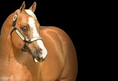 Shop for Breedings to 240 Stallions This Week