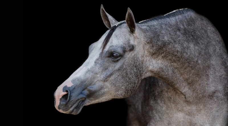 Oh Snap…. Snap It Send It Named NSBA Horse of the Year.