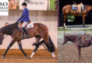 Bid Now on Horses and Saddles – April Internet Auction