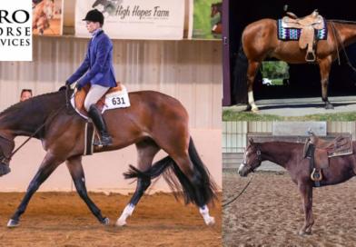 Bid Now on Horses and Saddles – April Internet Auction