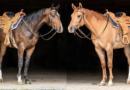 9th Annual Penn State Quarter Horse Sale Bidding Closes May 1st