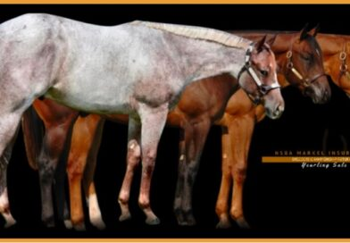 Outstanding Yearlings Offered at NSBA Sale