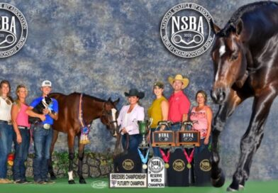 Good Better Best Sires  NSBA Sale Record Breaking Yearling