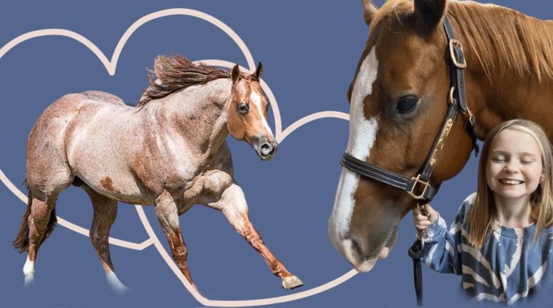 Horses for Heart