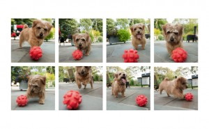 Ollie playing ball Poolside