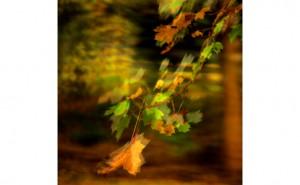 Seeing Mercury Vapor Leaf study Lenox MA