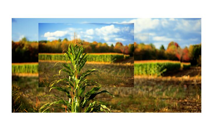 Assembled Harvest VII