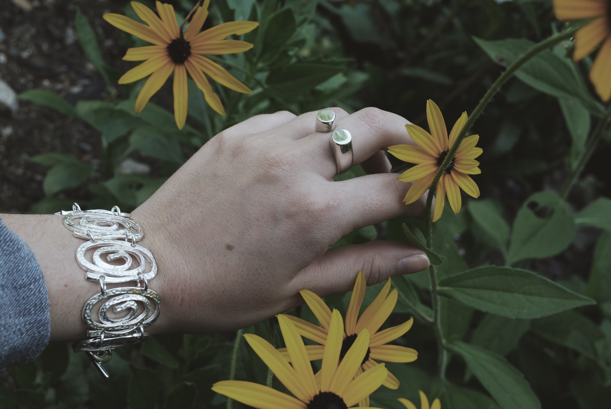 sunflowers with rings