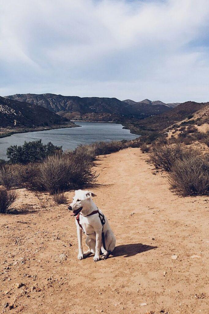 Dog hiking near Lake Hodges.