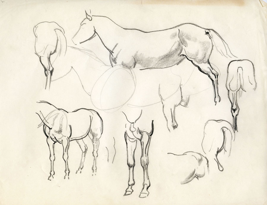 Pencil sketches of horses