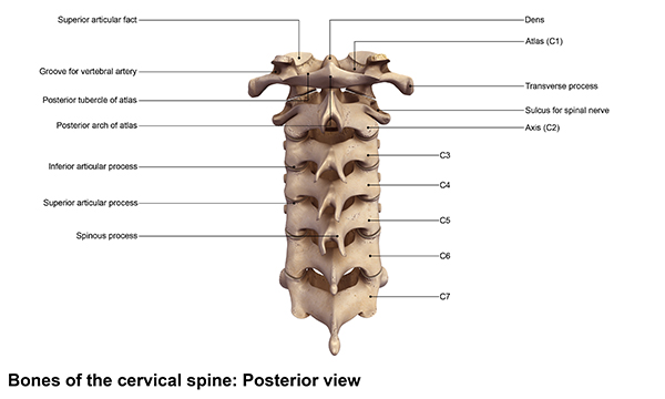 cervical spinal cord compression, treatment for cervical spinal cord compression