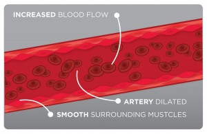 Prime-Nitric-Oxide-Activator-relaxed artery