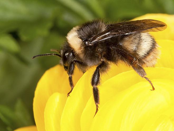 Nhiều loài côn trùng đang sắp tuyệt chủng /// Reuters