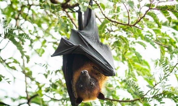 Những động vật hoang dã mang virus gây đại dịch - Ảnh 1.