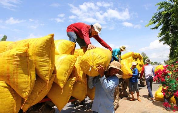 Bộ Nông nghiệp: xuất khẩu gạo tăng, nhưng nằm trong sự kiểm soát - Ảnh 1.