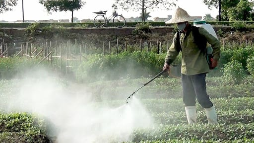 Kết quả hình ảnh cho trồng rau bẩn