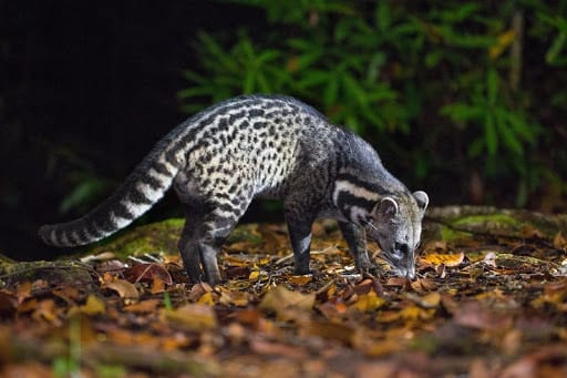 Những động vật hoang dã mang virus gây đại dịch - Ảnh 3.