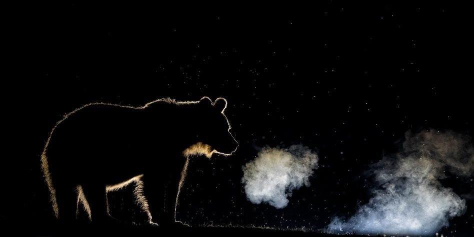 Thiên nhiên tuyệt đẹp trong cuộc thi nhiếp ảnh quốc tế 2020 - Ảnh 10.