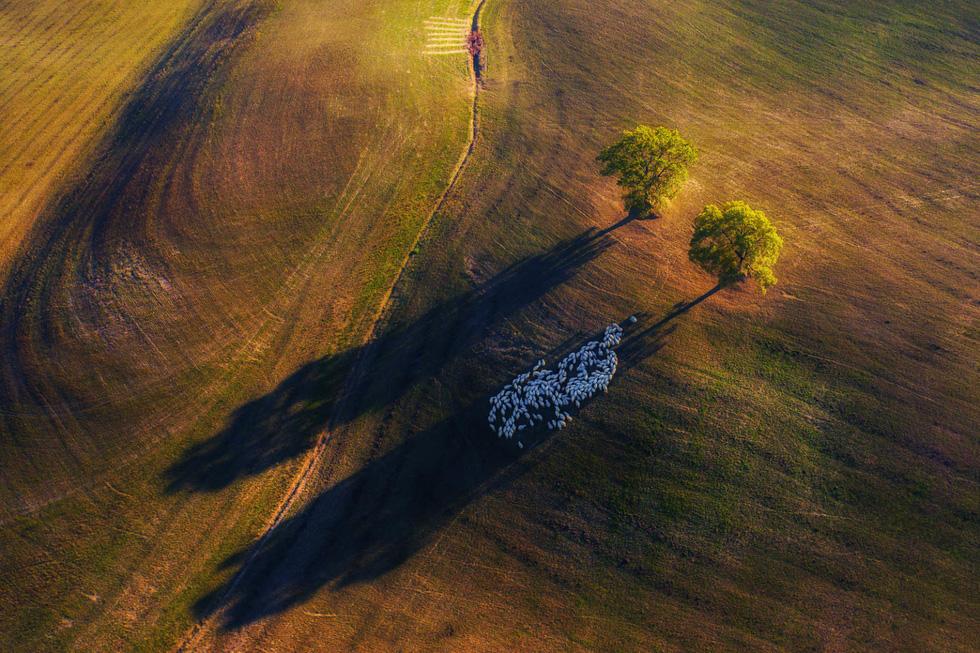 Thiên nhiên tuyệt đẹp trong cuộc thi nhiếp ảnh quốc tế 2020 - Ảnh 2.