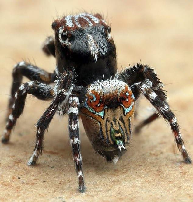 Phát hiện loài nhện hoa văn như tranh của Van Gogh - Ảnh 6.