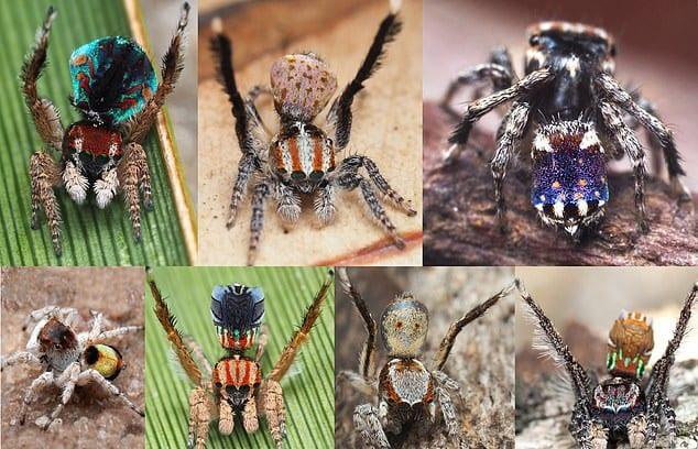 Phát hiện loài nhện hoa văn như tranh của Van Gogh - Ảnh 3.