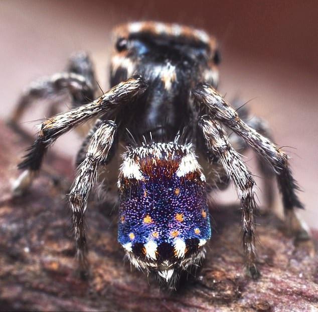 Phát hiện loài nhện hoa văn như tranh của Van Gogh - Ảnh 1.