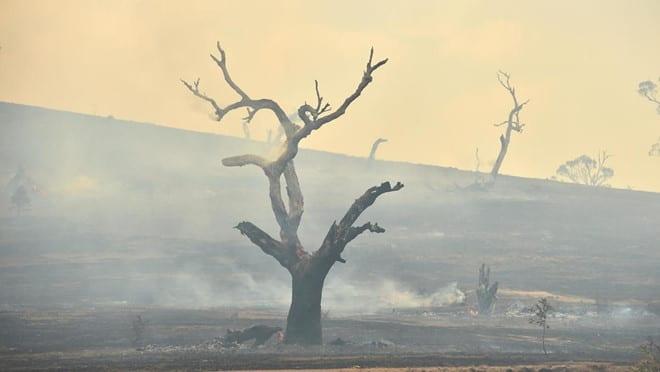 Cháy rừng ở Úc vào tháng 2 /// AFP