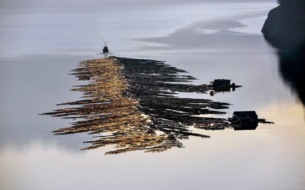 Sững sờ với nước qua giải Nhiếp ảnh quốc tế Hamdan năm 2020 - Ảnh 4.
