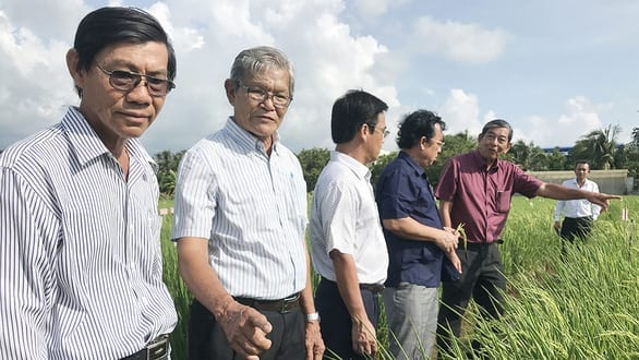 Gạo Việt đừng mải mê sản lượng - Ảnh 2.