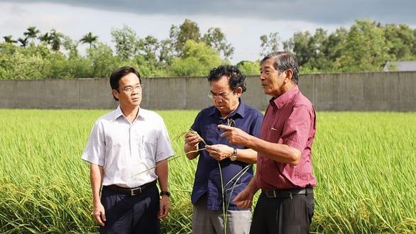 Gạo Việt đừng mải mê sản lượng - Ảnh 1.